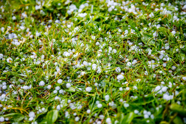 Hail on the grass Stock photo © cookelma