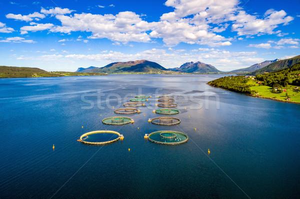 Boerderij zalm vissen antenne fotografie Noorwegen Stockfoto © cookelma
