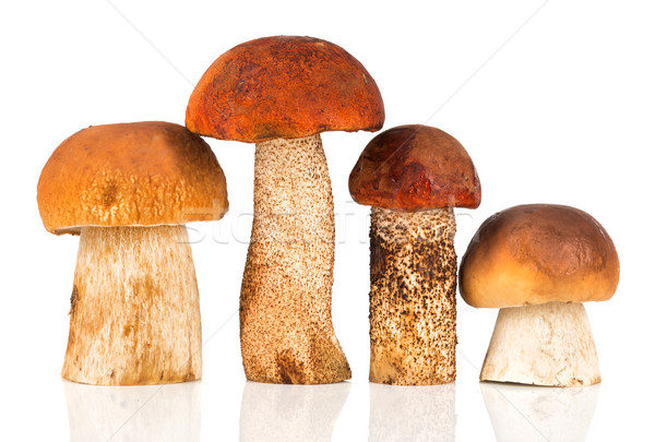 Orange-cap Boletus and porcini mushroom Stock photo © cookelma