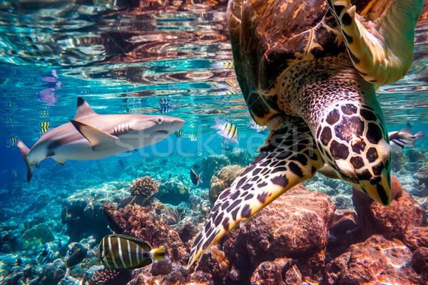 тропические коралловый риф разнообразие мягкой тропические рыбы Мальдивы Сток-фото © cookelma