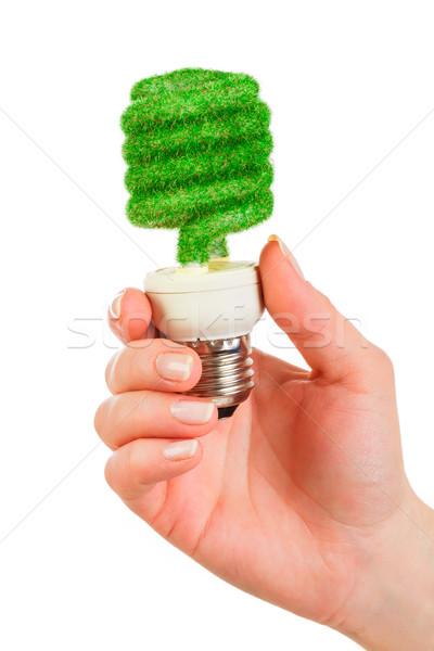 Stockfoto: Eco · gloeilamp · hand · geïsoleerd · witte · achtergrond