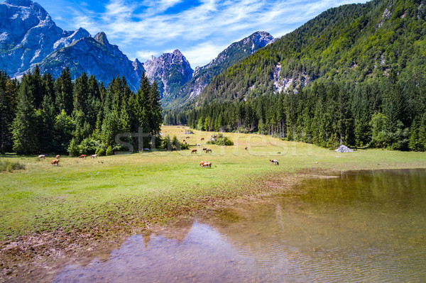 Horses graze on green field.Lake Lago di Fusine Superiore Italy  Stock photo © cookelma