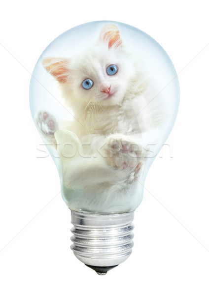 Electric lamp and kitten Stock photo © cookelma