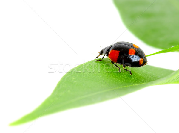 The small bug on a leaf of a plant. Stock photo © cookelma