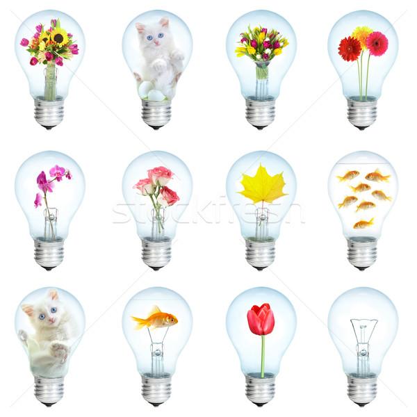 Twaalf elektrische bloem vis natuur licht Stockfoto © cookelma
