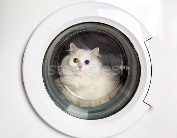 washing machine and cat Stock photo © cookelma