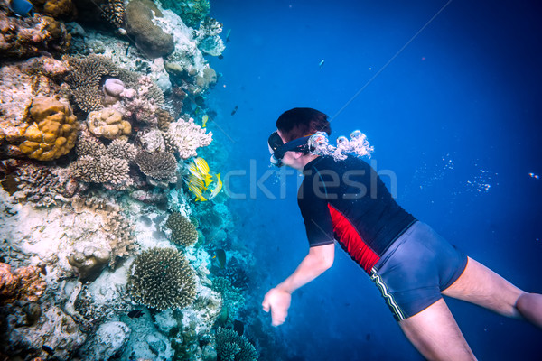 Snorkeler Maldives Indian Ocean coral reef. Stock photo © cookelma
