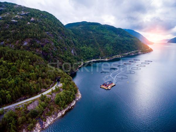 Farm lazac halászat Norvégia légi fotózás Stock fotó © cookelma
