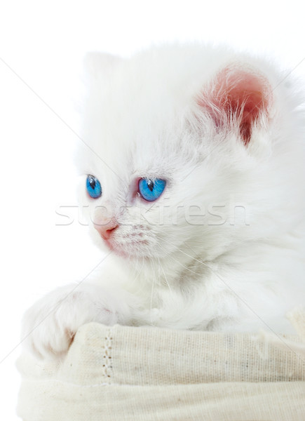 White kitten in a basket. Stock photo © cookelma