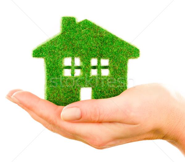 Gras home isoliert weiß menschlichen Hände Stock foto © cookelma