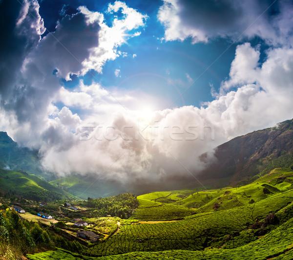 Chá Índia paisagem primavera madeira floresta Foto stock © cookelma