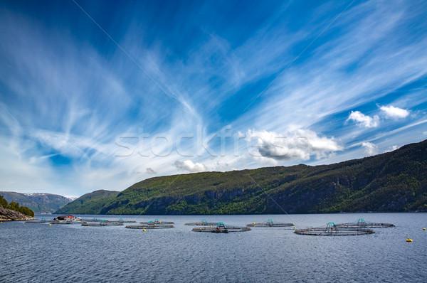 Boerderij zalm vissen Noorwegen voedsel natuur Stockfoto © cookelma