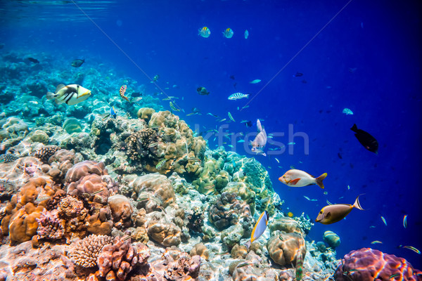 Trópusi korallzátony választék puha trópusi hal víz Stock fotó © cookelma