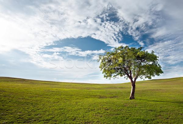 Boom blauwe hemel eenzaam voorjaar hout zon Stockfoto © cookelma