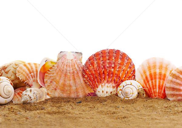 Sea cockleshells Stock photo © cookelma