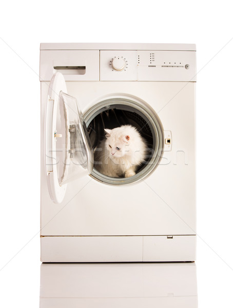 Wasmachine kat wasmachine machine witte technologie Stockfoto © cookelma