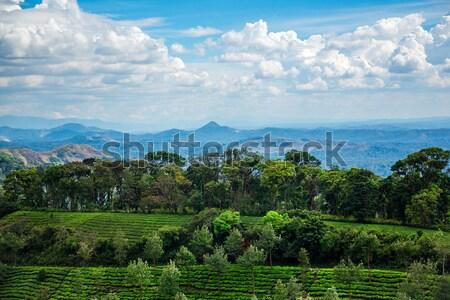 Tea plantations in India Stock photo © cookelma