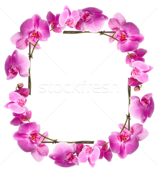 Framework from flowers orchids Stock photo © cookelma