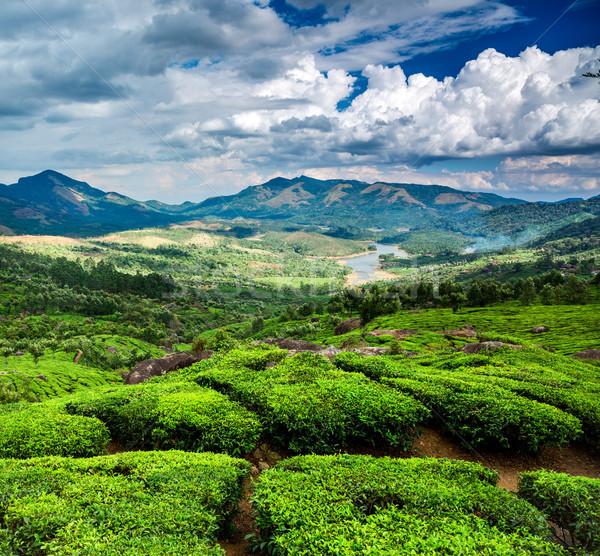 чай Индия пейзаж весны древесины лес Сток-фото © cookelma