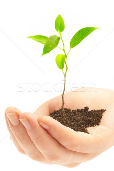 Menselijke handen jonge plant houden baby Stockfoto © cookelma