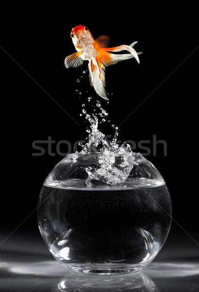 Akvaryum balığı atlamak akvaryum karanlık balık hayvanlar Stok fotoğraf © cookelma