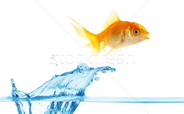 gold small fish jumps out of water Stock photo © cookelma