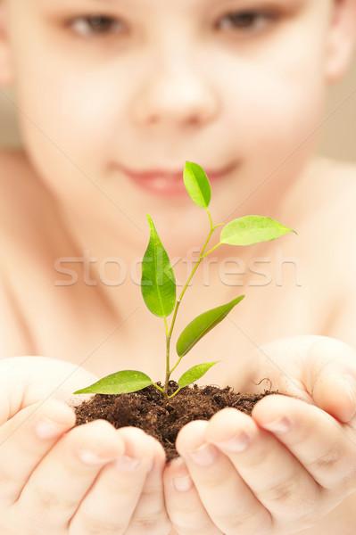 Menino jovem planta árvore criança folha Foto stock © cookelma