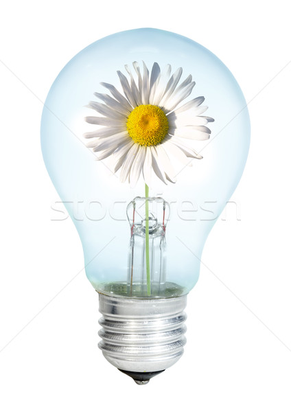 Electrobulb with oxeye Stock photo © cookelma