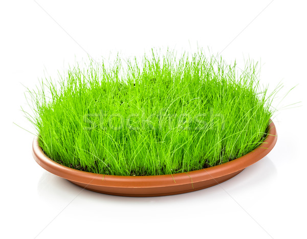 Green grass isolated on white background Stock photo © cookelma
