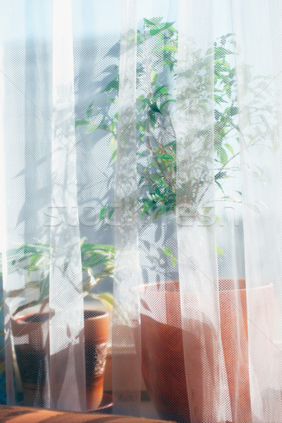 Flower on a window sill  Stock photo © cookelma