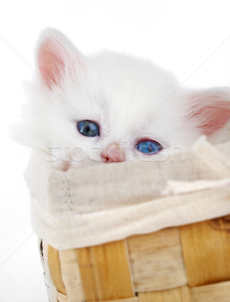 Fehér kiscica kosár mosoly szem macska Stock fotó © cookelma