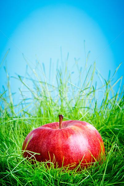 Elma çim kırmızı elma yeşil ot mavi gökyüzü Stok fotoğraf © cookelma
