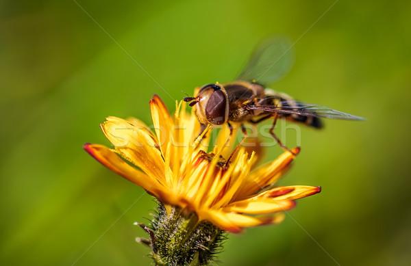 Bee nectar bloem natuur achtergrond zomer Stockfoto © cookelma