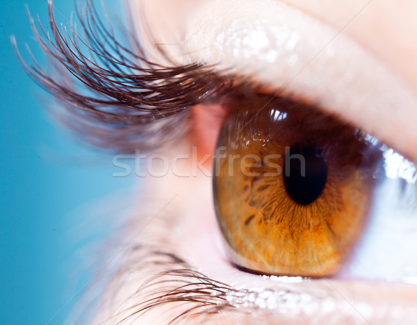 Human eyelashes close up. Stock photo © cookelma