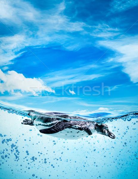 Pinguin zwemmen textuur abstract natuur zee Stockfoto © cookelma