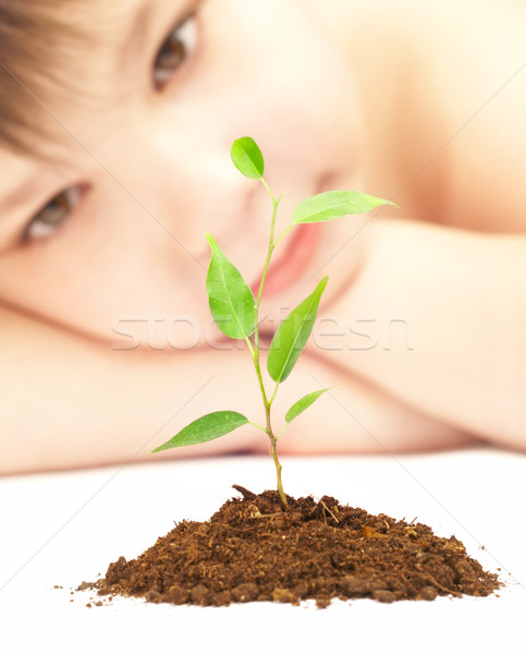 boy looks at a young plant Stock photo © cookelma