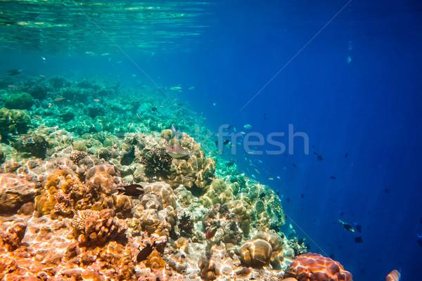 Trópusi korallzátony választék puha óceán figyelmeztetés Stock fotó © cookelma