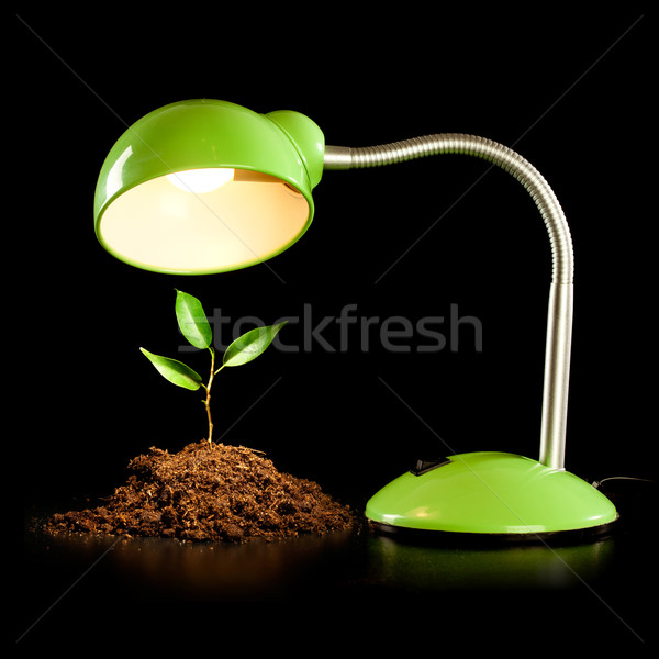 Young sprout and table lamp Stock photo © cookelma