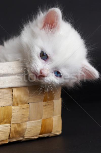 белый котенка корзины улыбка глаза природы Сток-фото © cookelma