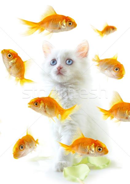 kitten and fish Stock photo © cookelma