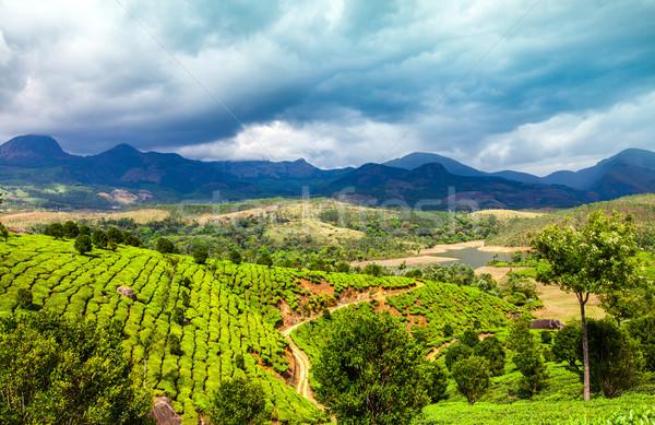 Thee Indië landschap voorjaar hout bos Stockfoto © cookelma