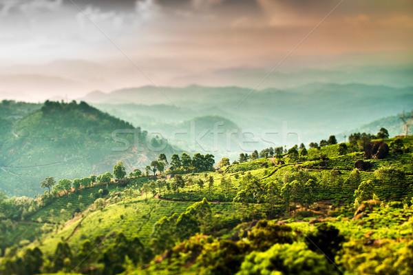 Thee Indië verschuiven lens landschap voorjaar Stockfoto © cookelma