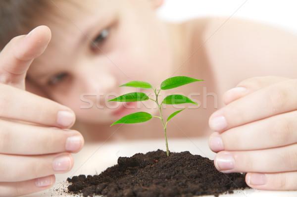 Fiatal növény vetélkedő fiú fa gyermek Stock fotó © cookelma