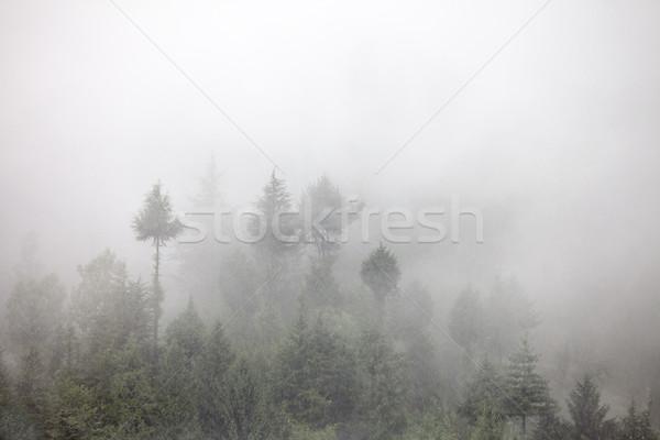 тумана утра лес небе дерево пейзаж Сток-фото © cookelma