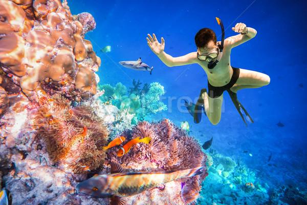 Maldivler Hint okyanus dalış beyin Stok fotoğraf © cookelma