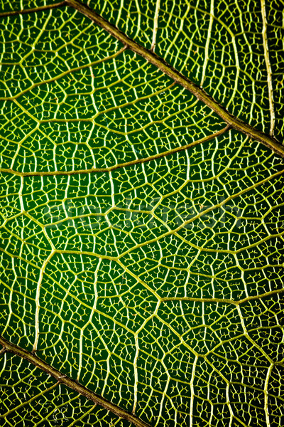 abstract background green leaf close-up Stock photo © cookelma