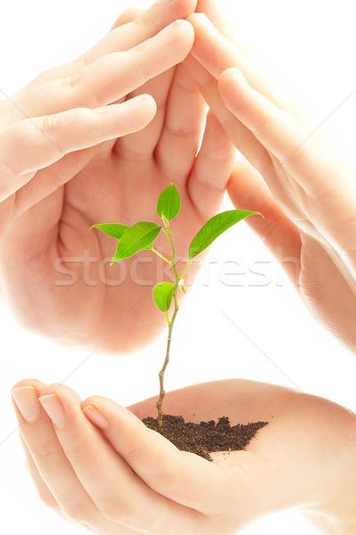 Stok fotoğraf: Insan · eller · genç · bitki · bebek