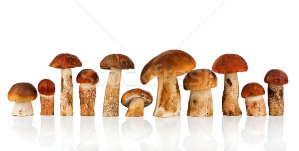 Paddestoel porcinipaddestoel witte voedsel natuur eten Stockfoto © cookelma
