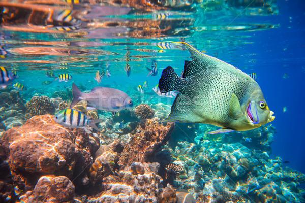 Trópusi korallzátony választék puha trópusi hal Maldív-szigetek Stock fotó © cookelma