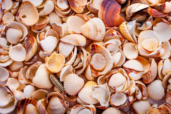 Conchas tropical abstrato fundo grupo vida Foto stock © cookelma